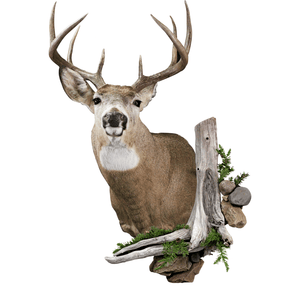 Wall Scenery - Matuska Taxidermy