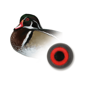 Europe Eyes | Shop by Species  - Ducks - Matuska Taxidermy