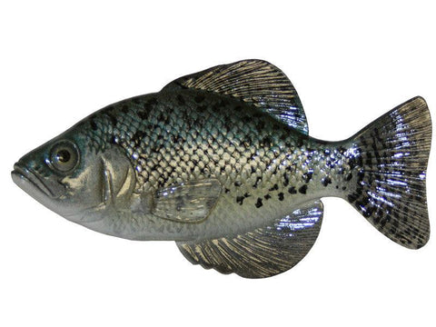 Black Crappie | Reproduction Chase Fish - Matuska Taxidermy