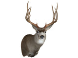 Mule Deer Semi-Sneak
