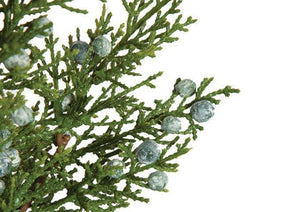 Juniper Spray w/ Berries - Matuska Taxidermy