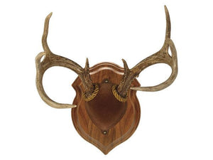 Economy Antler Display Kit - Matuska Taxidermy