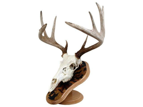 Deluxe Euro Skull Display Kit - Matuska Taxidermy