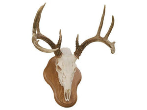 European Antler Panels - Matuska Taxidermy