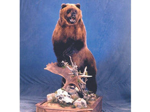 Grizzly Bear - Matuska Taxidermy