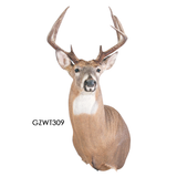 Trademark Manikins Upright Series - Matuska Taxidermy