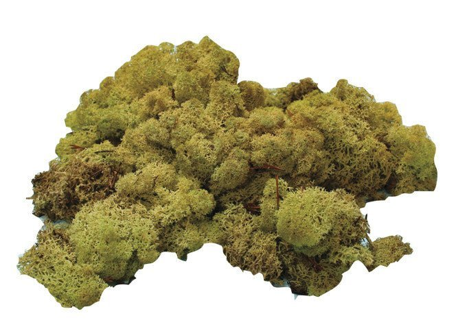 Reindeer Moss (4 oz.) - Matuska Taxidermy