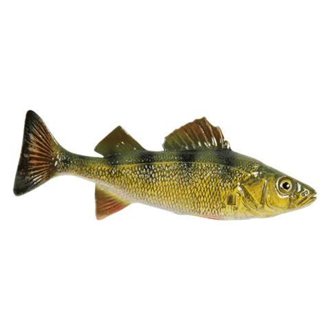 Perch | Reproduction Chase Fish - Matuska Taxidermy