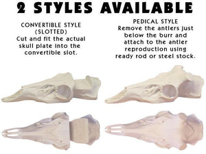 Counterfeit Skulls - Fully Detailed - Matuska Taxidermy