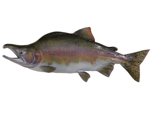 Salmon, Pink - Matuska Taxidermy