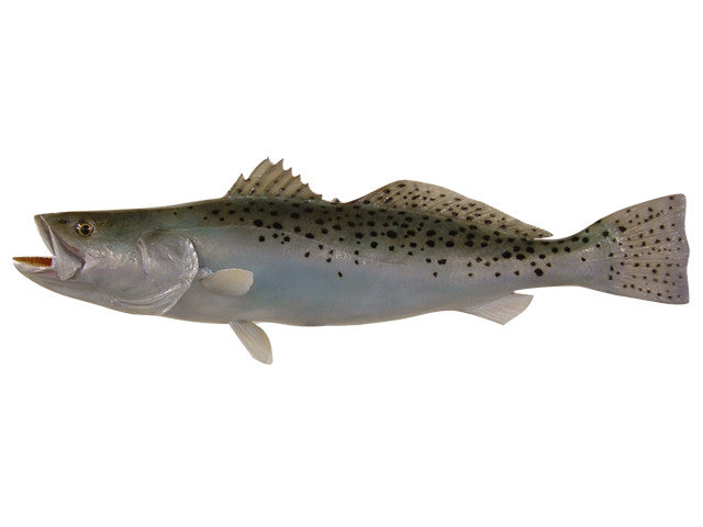 Trout, Speckled Sea - Matuska Taxidermy