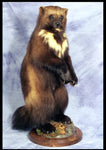 Thick Base - Round - Matuska Taxidermy