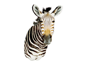 Zebra by Gary Zehner - Matuska Taxidermy