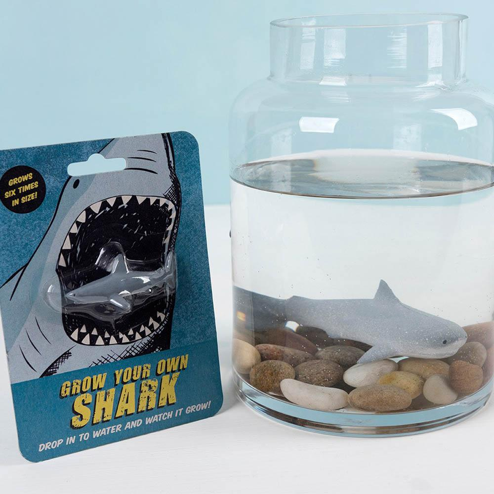 Click to view product details and reviews for Grow Your Own Shark.