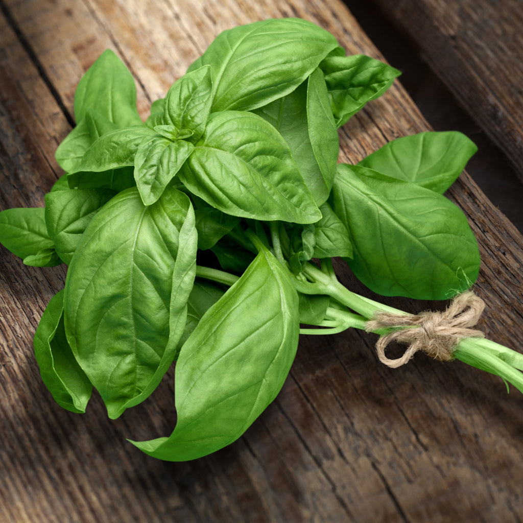 BASIL (by the container)