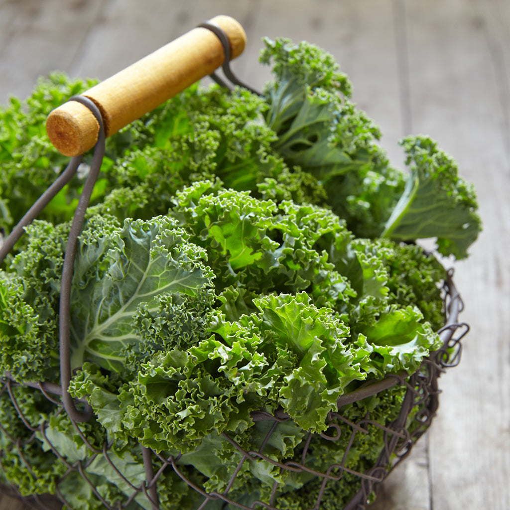 KALE  Baby Organic (by the pound)
