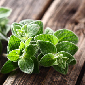 OREGANO  (by the each)