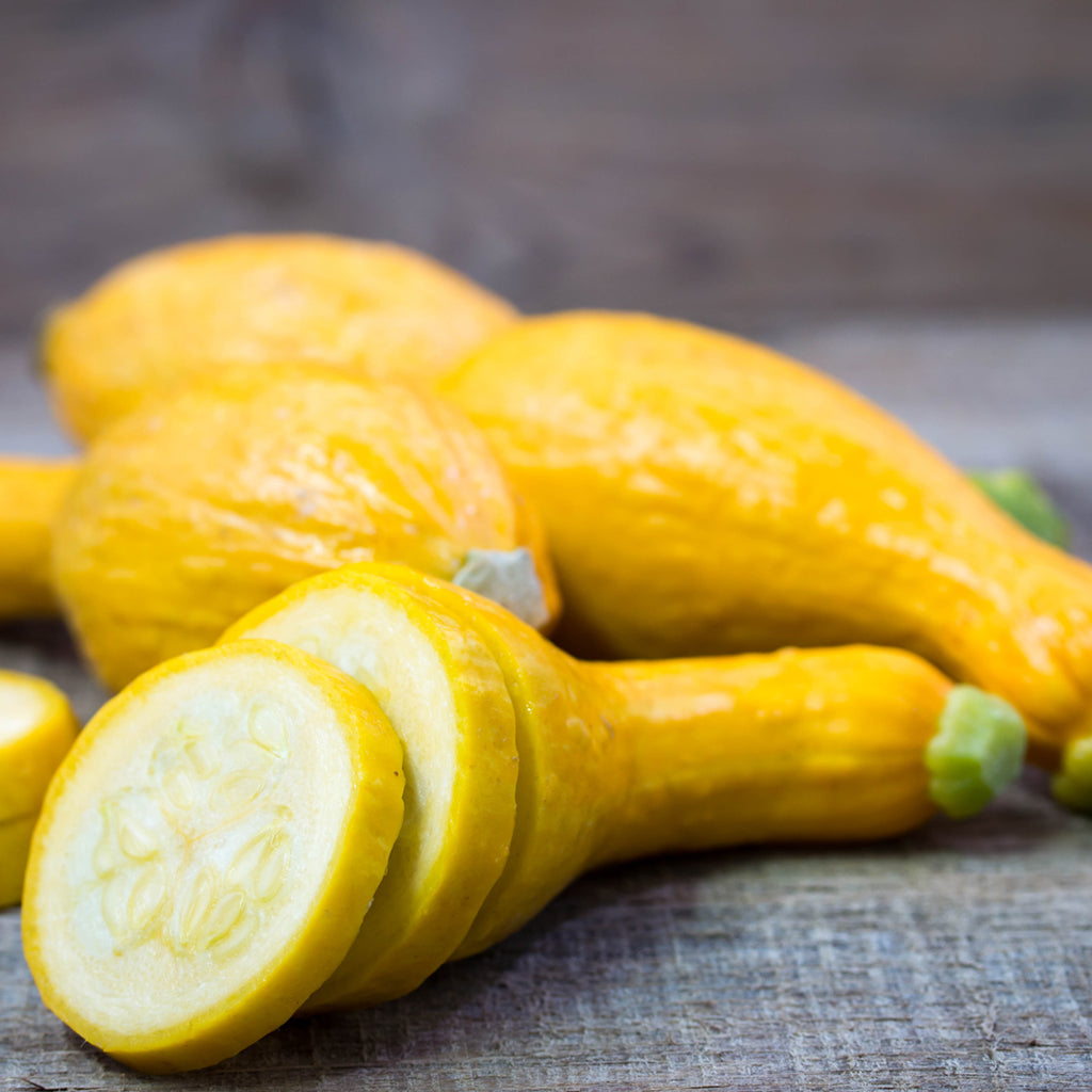 YELLOW SQUASH FANCY (by the pound)