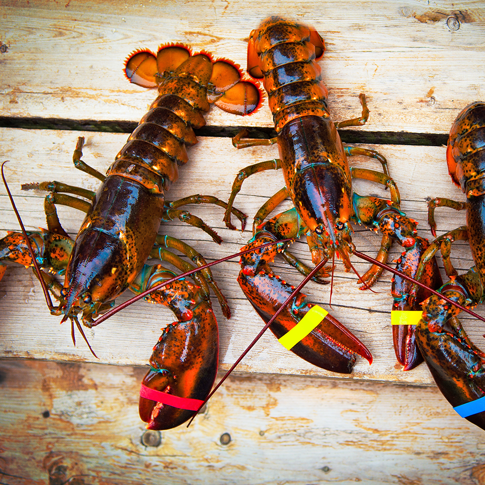 Whole Lobster - PICK UP IN STORE / NO DELIVERY