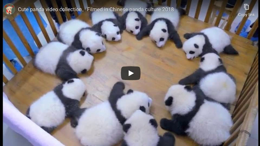 Big Boy Bamboo Presents Cute, Funny Panda Videos from the Internet
