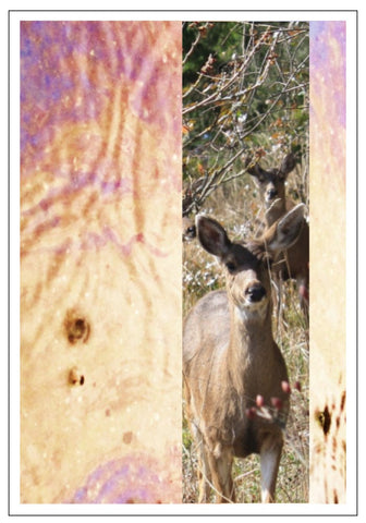 Valerie Taylor Greeting Card w/Envelope - Deer Stripe VT106
