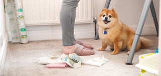 welcome to bobbin and bumble shop image with ralph the pomeranian
