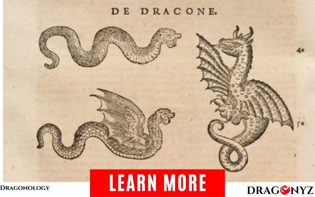 Dragonology Or Dracology, Science Of Study, Research On Dragons