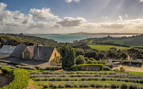 Mudbrick Vineyard view over the vines and out to the shining sea with the city of Auckland far in the background