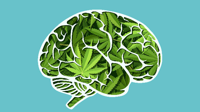 What A Breakthrough! Study Shows CBD Can Improve Memory