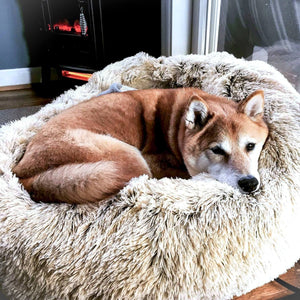 pet boutique co deepsleep dog bed