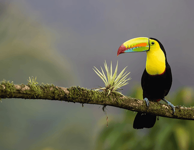 A Budget Traveler's Guide to Costa Rica