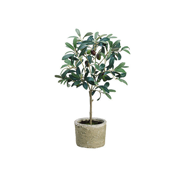"19.5"" Olive Tree in Pot"