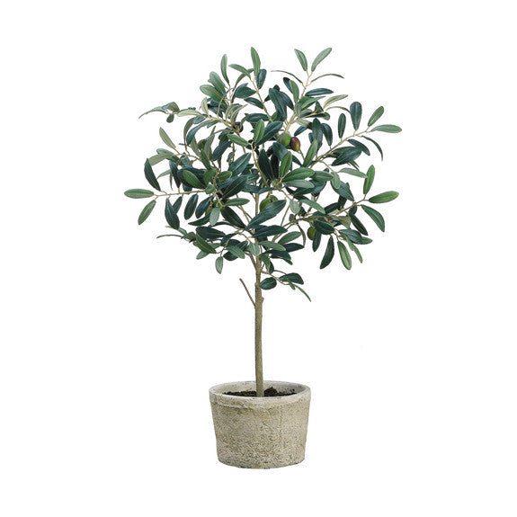 "26"" Olive Tree in Pot"