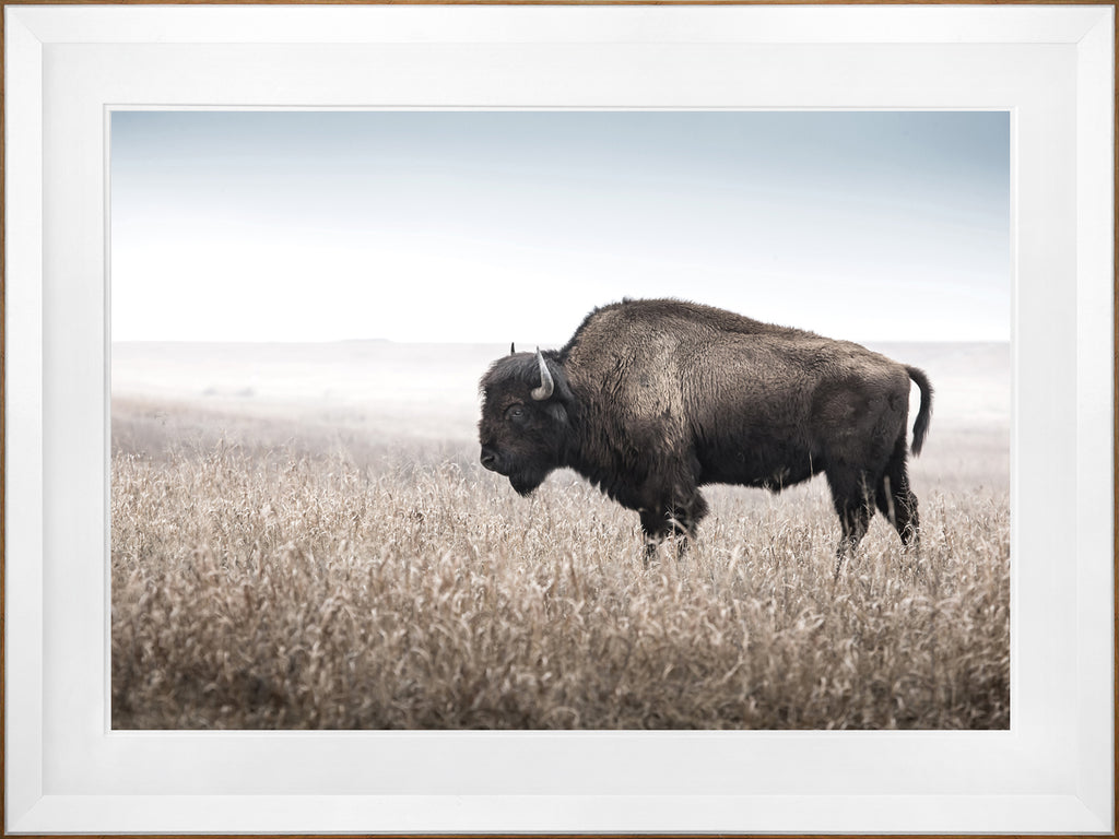 Bison Field Framed Art