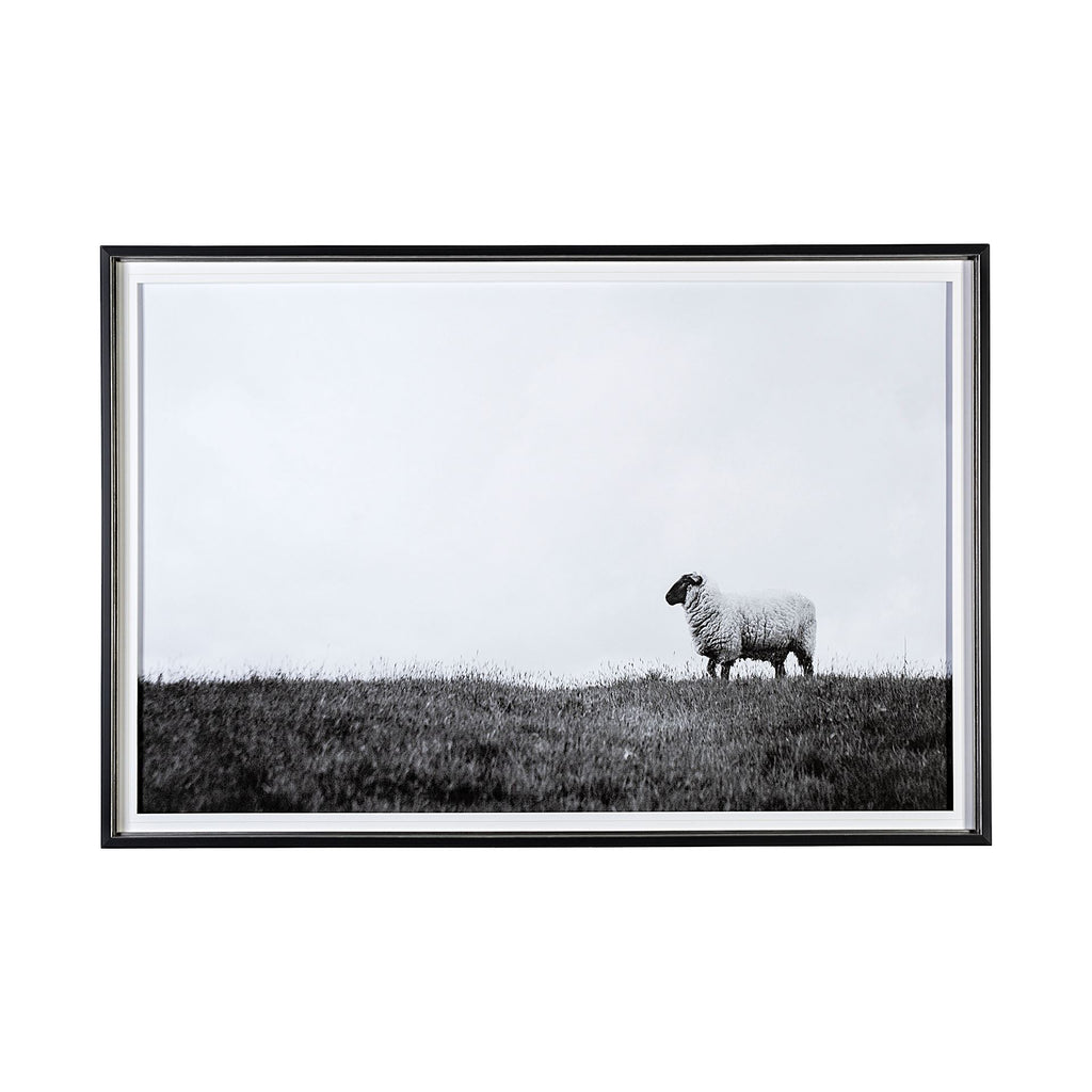 Framed Art - Lone Sheep