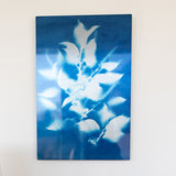 Chokecherry Sun Print on Metal (12 x 18) with a float mount
