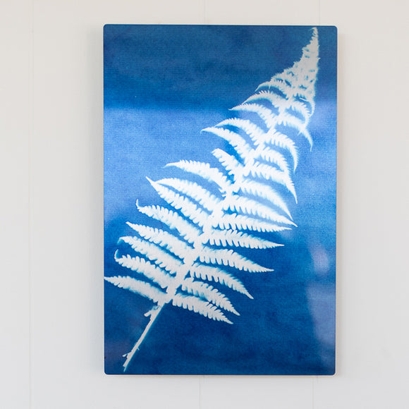 Fern Sun Print on Metal (8 x 12) with a float mount
