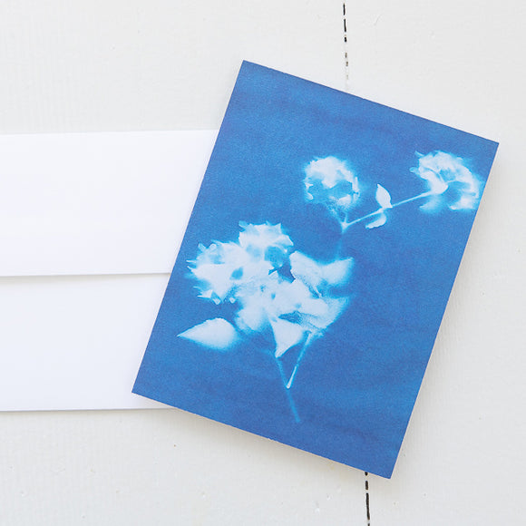 Korean Spice Bush Sun Print Note Card (single card) with envelope
