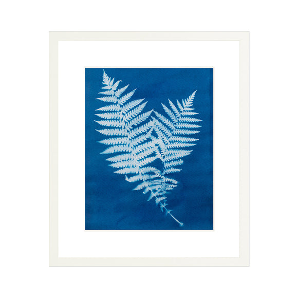Two Ferns Sunprint