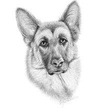 German Shepherd Face - Black/White/Vintage
