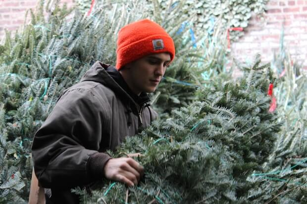 Dan getting Christmas trees ready for delivery