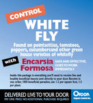 Orcon Whitefly Wasp (Encarsia formosa) Mail-Back, pack of 5