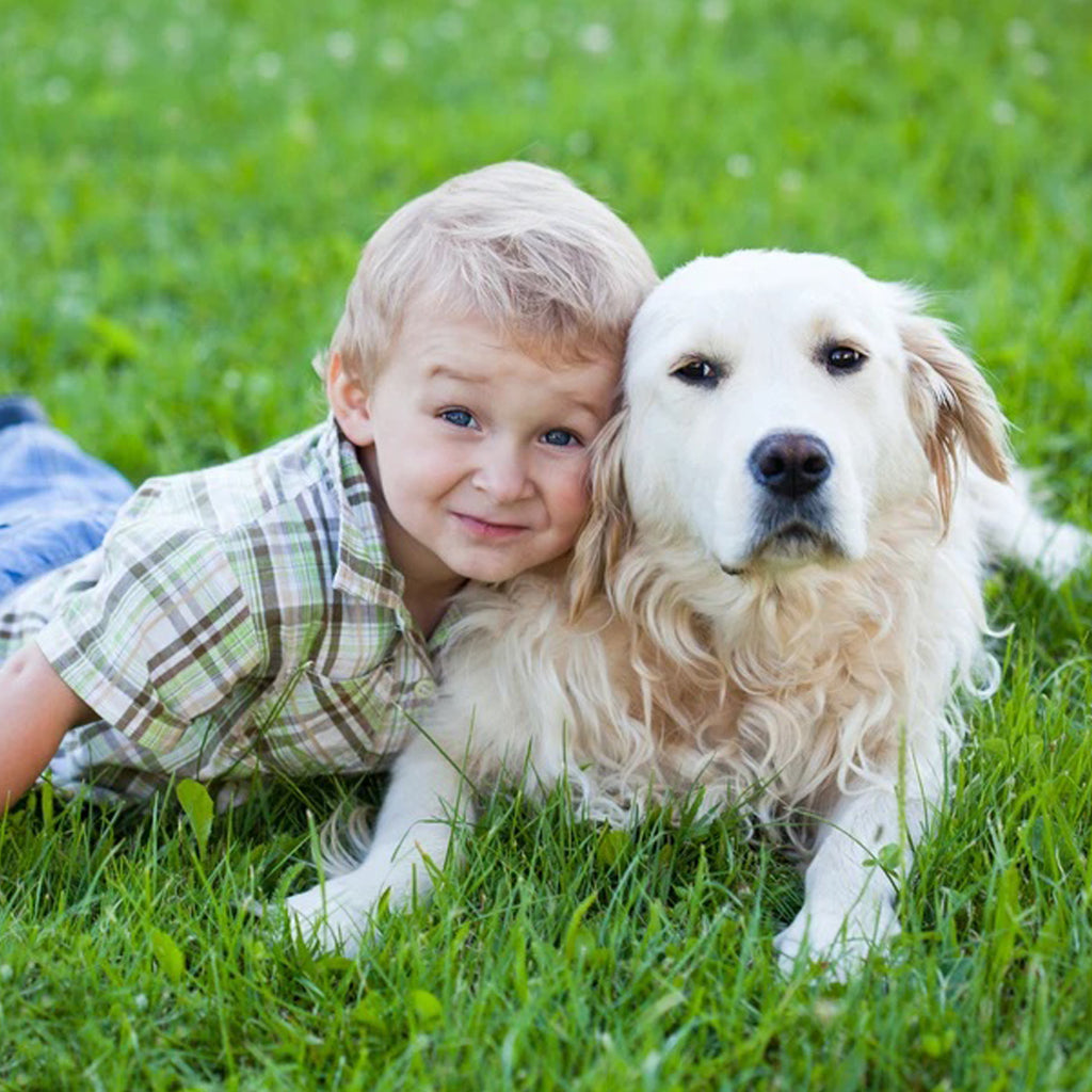 Tick Prevention For Dogs