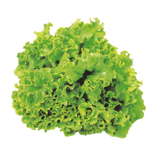 Leaf Lettuce - Green or Red