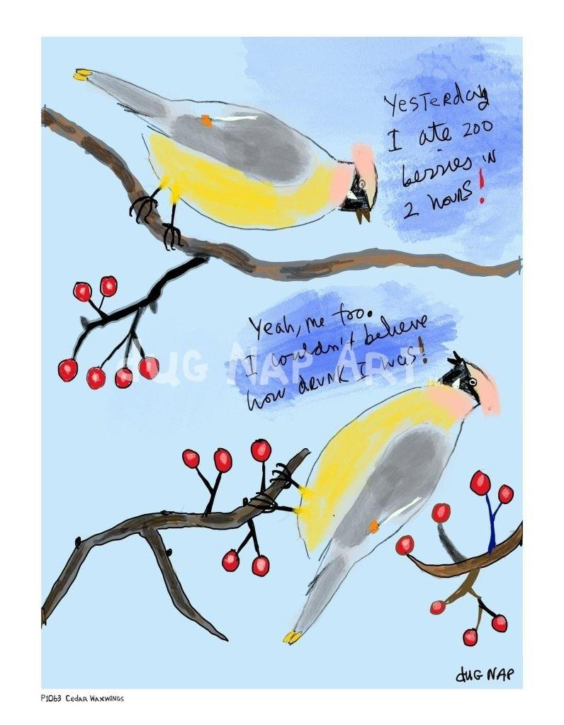 P1063 - Cedar Waxwings - dug Nap Art