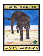 P520 - Lab Watching Ball (Chocolate) Unframed Print / Small (8.5 X 11) No Frame Art