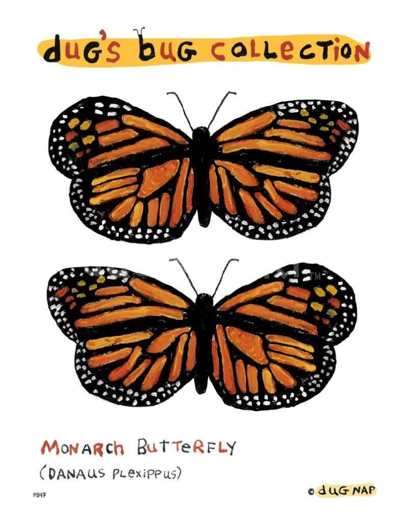 P847 - Monarch Unframed Print / Big (16 X 20) No Frame Art
