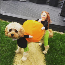 Dog & Cat Pumpkin Halloween Costume