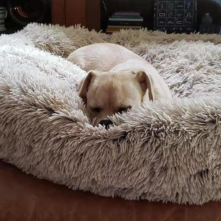 Amazingly Comfortable Dog Bed