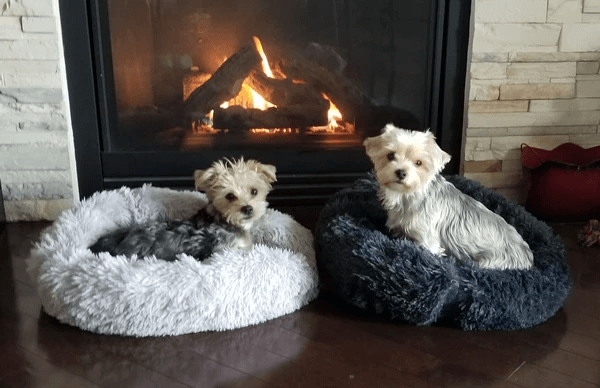 Ourpetmarket™ Comfy Calming Dog/Cat Bed
